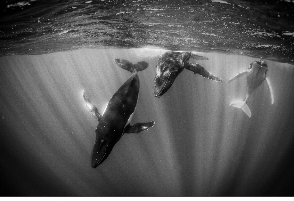 2010 International Conservation Photography Awards