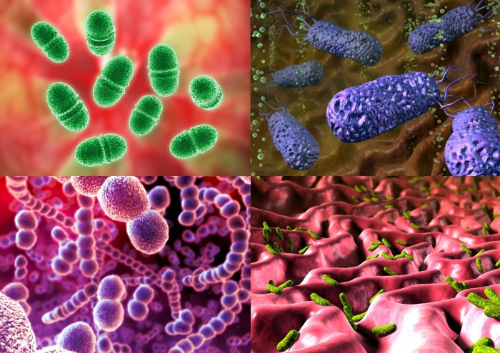 effects of different antibiotics on bacteria