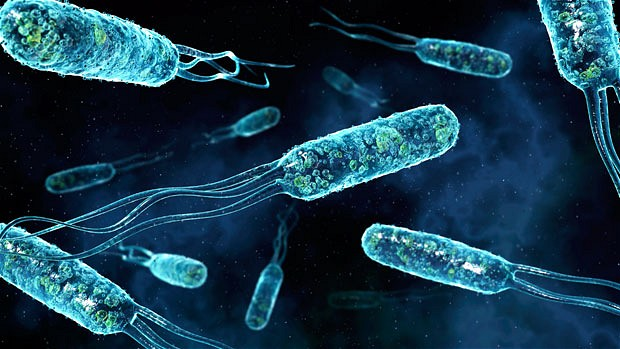 micro lan unknown bacteria salmonella Need microbiology help- unknown bacteria we just finished the unknown bacteria in my micro r/o serratia shigella salmonella klebsiella enterobacter proteus.
