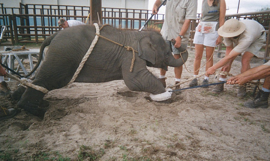cruelty to animals in circuses essay